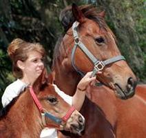 Horse Health and Safety Workshop