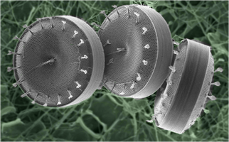 Tiny Giants: Marine microbes revealed on a grand scale