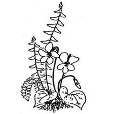 Virginia Native Plant Society, Potowmack Chapter logo