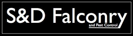Discount Voucher Customers Falconry Experience