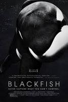 {u'text': u'Blackfish', u'html': u'Blackfish'}