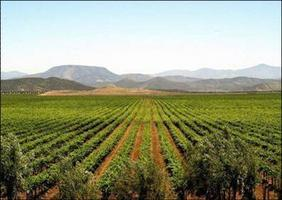 Baja Mexico Wine and Vineyard Country Tours with visit...