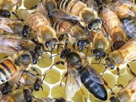 Get the Buzz on Beekeeping