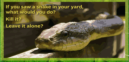 Common Snakes in Florida