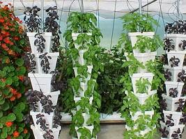 Hydroponics for Homeowners