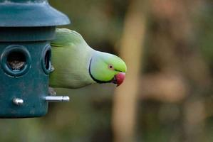 Parakeet Walk and Talk