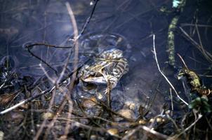 Amphibian Walk and Talk