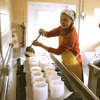 The Kitchen Creamery: Cheesemaking 101 at the Milkhouse