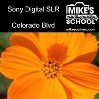 Sony Interchangeable Lens Cameras- Denver
