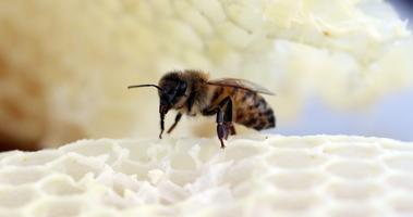 BEES & HONEY: From Flower to Table