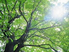 Knowing Native Trees and Shrubs in Summer