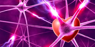 LOVE AMONG THE NEURONS: A Neuroscience Guide to...