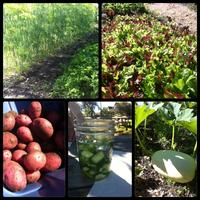 Choosing What Veggies to Grow - Garden Workshop (Free)