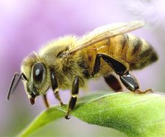 Minimizing Honey Bee Exposure to Pesticides