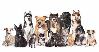Beginning Animal Communication