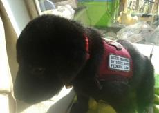 Service Dog Training and Supplies Fundraiser