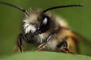 University of Maryland Native Bee Workshop