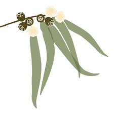 Friends of Native Wildlife Inc. logo
