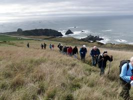 Jenner Headlands Preserve Spring Wildflower Hike With P...