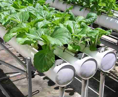 2015 Hydroponic Gardening for the Homeowner
