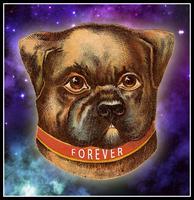 Forever Dog Thursdays