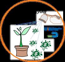 Free Ornamental Nursery Herbicide evaluation by...