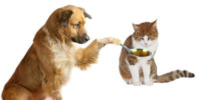 Quarterly Pet Health & Wellness Workshop