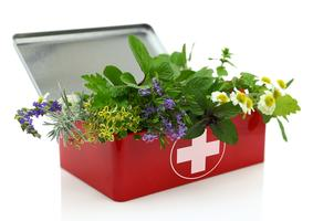 Starting A Homeopathic First Aid Kit For Your Pet