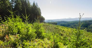 Southern Oregon Sustainable Forestry Teacher Tour