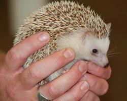 Amazing Ambassadors with Animal Embassy - Friday, May...