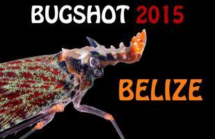 BugShot Belize 2015