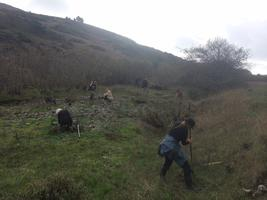 Jenner Headlands Preserve Volunteer Workday