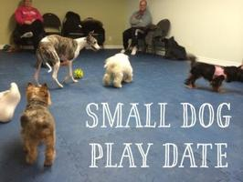 Small Dog Play Date