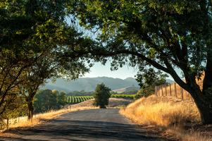 Wine Class:  California - Beyond Napa Valley