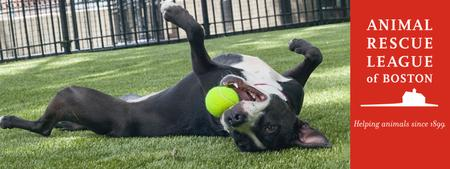 """Draughts for Dogs : The ARL Presents """"Dogs on the..."""