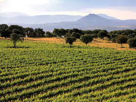 A Journey Through the Wines of La Mancha Featuring Bode...