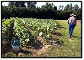 Louisiana SARE Farm Tour