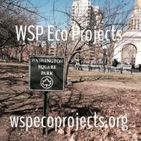 Spring Nature Walk in Washington Square Park