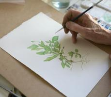 Botanical Illustration Workshop