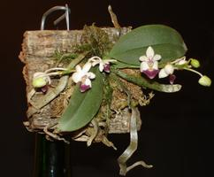 """Orchid """"Make and Take"""" Workshop"""