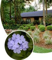 Dazzling Florida-Friendly Landscaping Designs