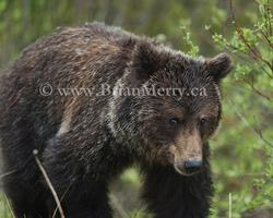 Banff National Park Wildlife Photography Tour
