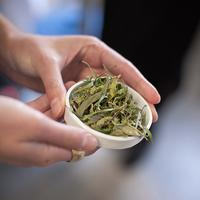 FIELD to BODY: Botanicals and Blending with Leaves and...
