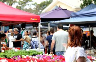 Orange Grove Markets (8:00am - 1:00pm) Saturdays FREE...