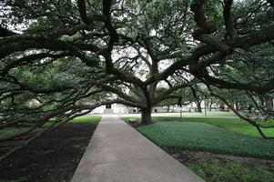 Library Issues Forum: Famous Trees of Texas