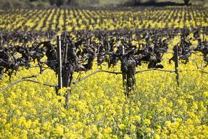 Complimentary Tasting: La Vida Loca -- Wines of Lodi