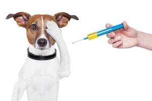 How Vaccines Impact Your Pet's Health