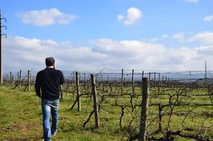 Prix Fixe Portugese Wine Dinner with Tiago Teles &...