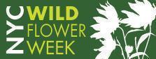 TALK WITH THE WILDFLOWERS OF BROOKLYN BRIDGE PARK