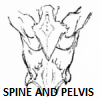 Positional Release Therapy_Spine and Pelvis...